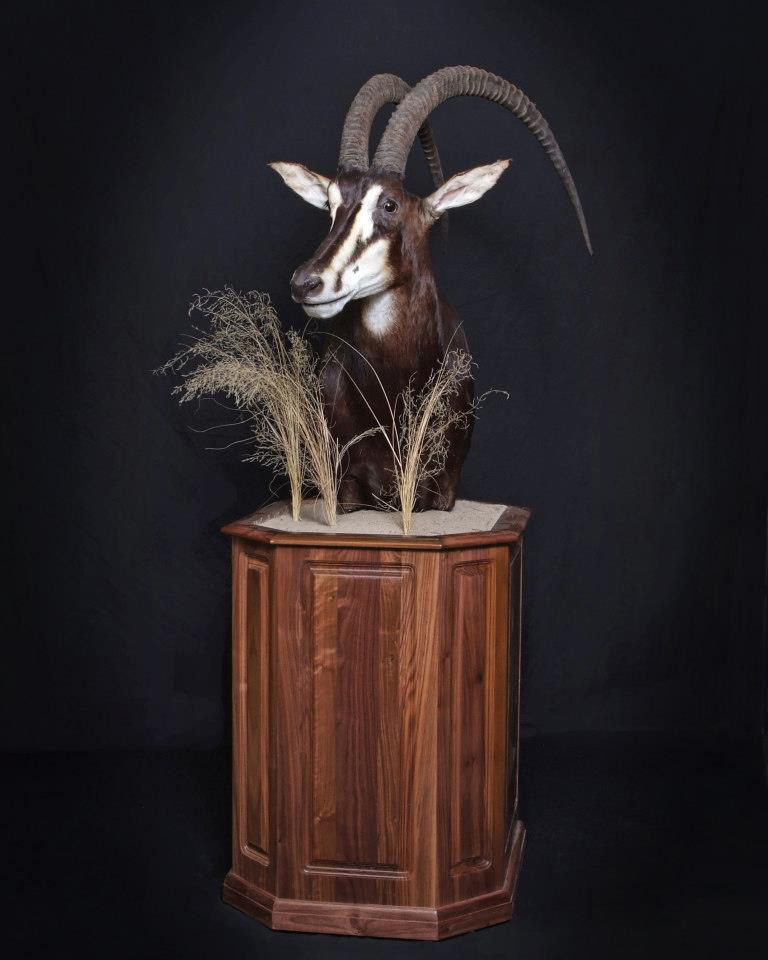 Sable Antelope with special base.