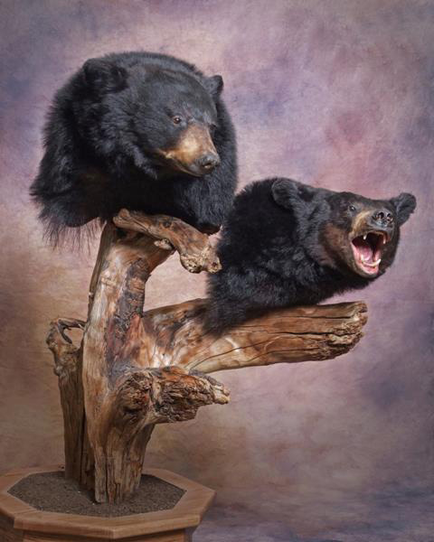 Black Bear Shoulder Mounts