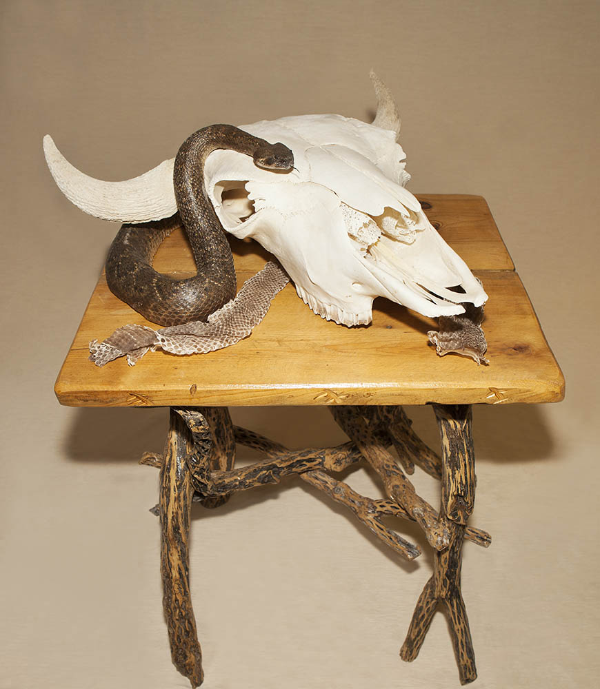 Posed snake with sheddings, skull, and base.